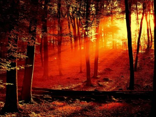 foret-coucher-de-soleil-720px.jpg